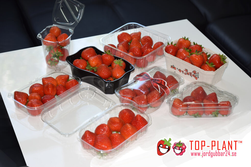 Tillverkare jordgubbar